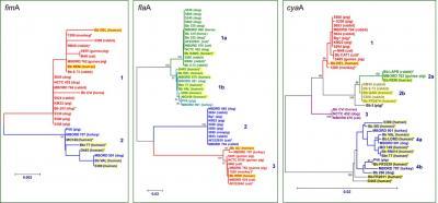 Filogenetikai fák