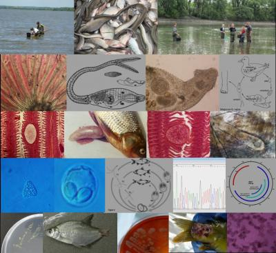 A Halkórtan és Parazitológia témacsoport főbb tevékenységei